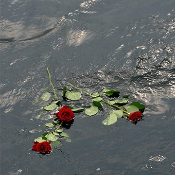 rote Rosen auf dem Wasser, Foto: Adobe Stock, Holger